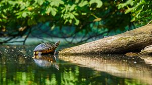Preview wallpaper turtle, water, log, reflection