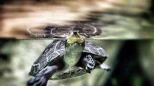 Preview wallpaper turtle, water, swim, shell