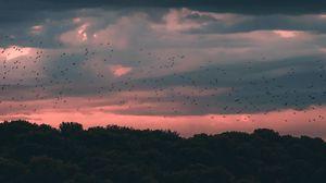 Preview wallpaper twilight, dark, clouds, trees, birds