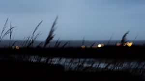 Preview wallpaper twilight, outlines, blur, grass, bokeh, dark