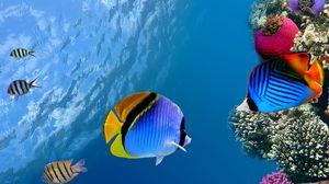 Preview wallpaper under water, coral, fish, sea, ocean