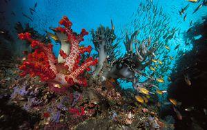 Preview wallpaper underwater world, fish, algae, colored