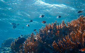 Preview wallpaper underwater world, ocean, fish, corals, algae