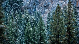 Preview wallpaper usa, california, yosemite, trees, forest