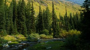 Preview wallpaper usa, washington, mt baker-snoqualmie national, forest, river