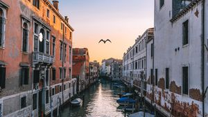 Preview wallpaper venice, italy, canal, seagull, river