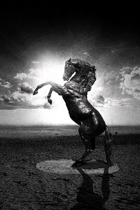 Preview wallpaper water, black, white, horse, abstraction