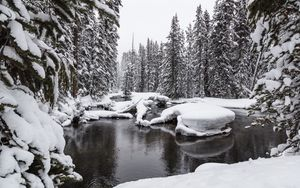 Preview wallpaper water, snow, forest, snowy