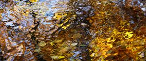 Preview wallpaper water, waves, ripples, reflection, autumn, macro