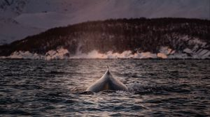 Preview wallpaper whale, fin, waves, sea, water