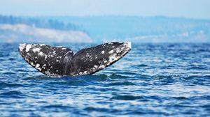 Preview wallpaper whale, jump, sea, ocean, sky