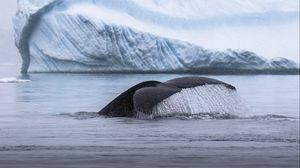 Preview wallpaper whale, tail, splash, ice, iceberg