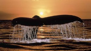 Preview wallpaper whale, tail, spray, sunset