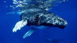 Preview wallpaper whale, water, ocean