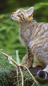 Preview wallpaper wild cat, glance, animal, tree, wildlife