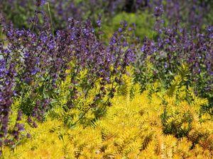 Preview wallpaper wild flowers, flowers, plants, macro, bright