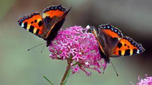 Preview wallpaper wings, butterfly, flower
