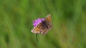 Preview wallpaper wings, butterfly, flowers, macro