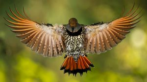 Preview wallpaper wings, tail, spots, beak