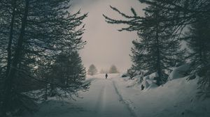 Preview wallpaper winter, snow, silhouette, forest, trees