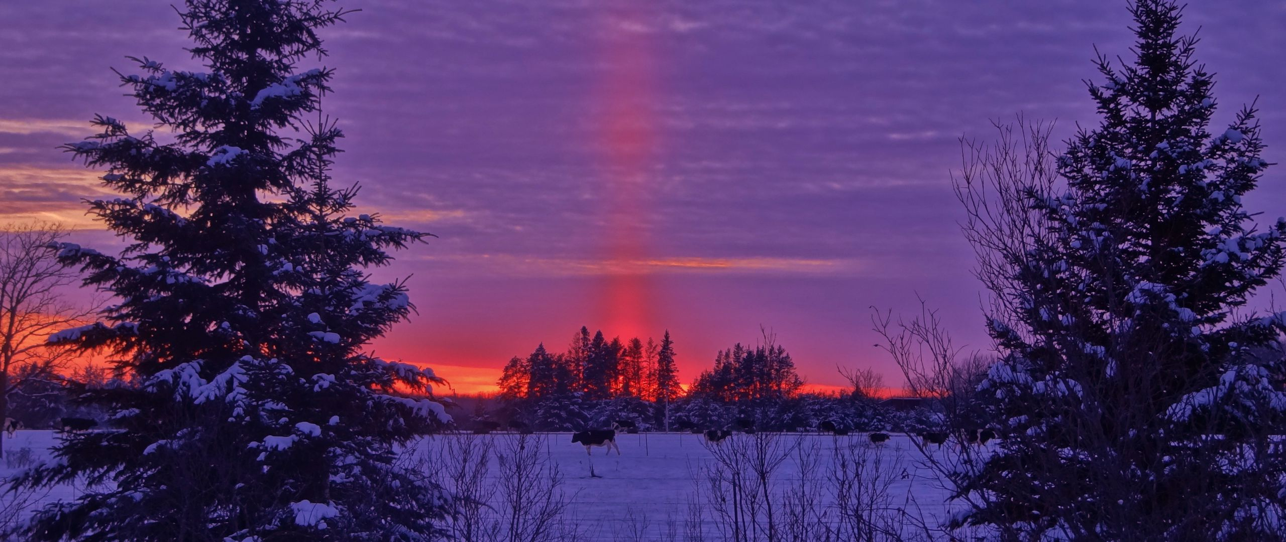 2560x1080 Wallpaper winter, sunset, field, landscape
