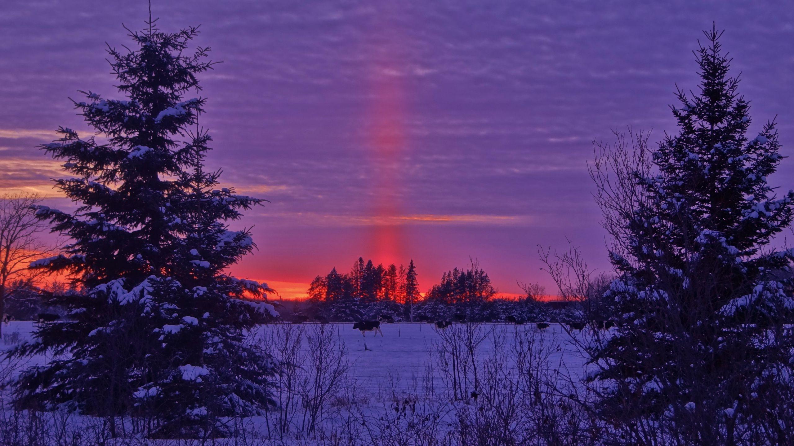 2560x1440 Wallpaper winter, sunset, field, landscape