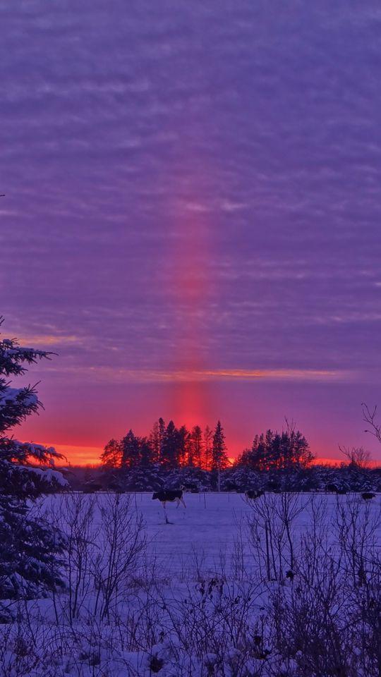 540x960 Wallpaper winter, sunset, field, landscape