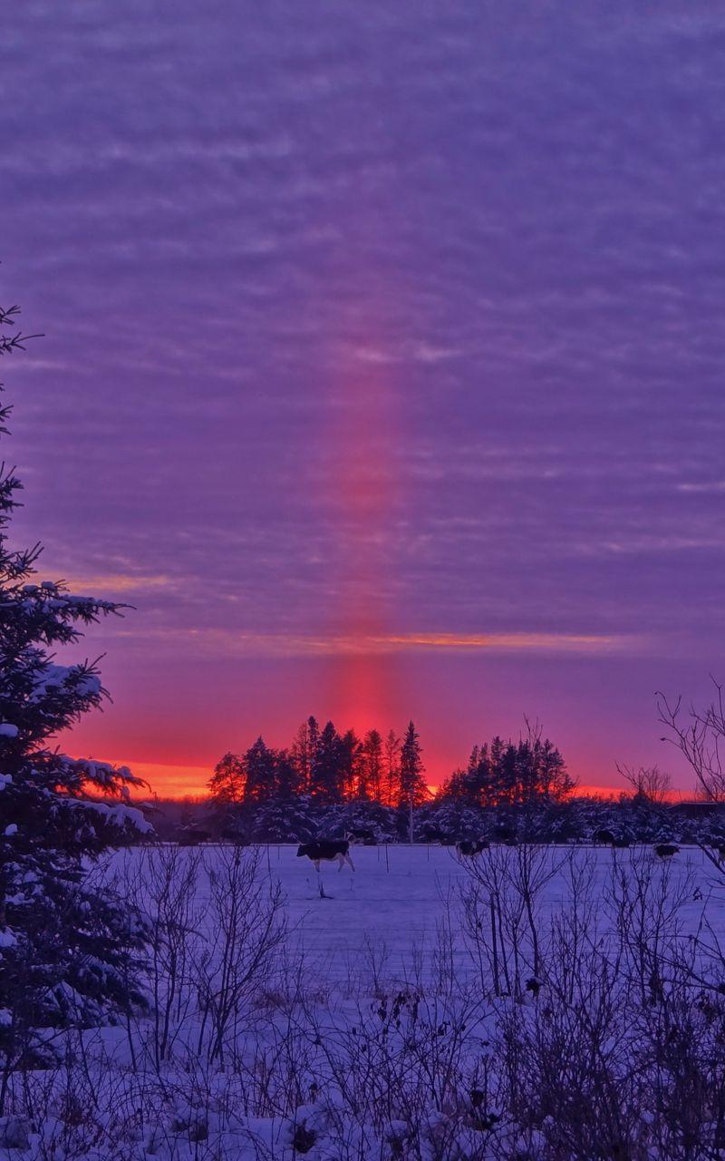 800x1280 Wallpaper winter, sunset, field, landscape