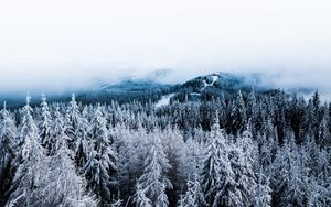 Preview wallpaper winter, trees, fog, snow, aerial view, forest