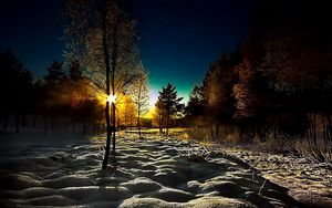 Preview wallpaper winter, wood, young growth, dawn, morning, shadows, cover, snowdrifts