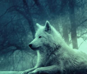 Preview wallpaper wolf, light, forest, wild, calm, peace