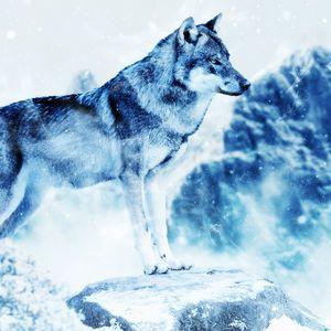Preview wallpaper wolf, photoshop, predator, art