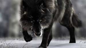 Preview wallpaper wolf, predator, black, wildlife, dog