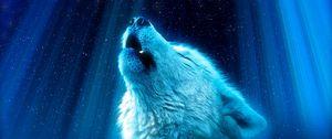 Preview wallpaper wolf, predator, howl, white, blue