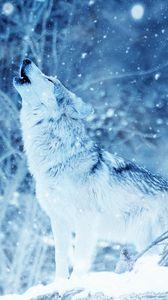 Preview wallpaper wolf, predator, howl, photoshop