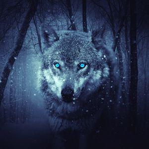 Preview wallpaper wolf, predator, photoshop, art