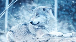 Preview wallpaper wolf, predator, photoshop, look