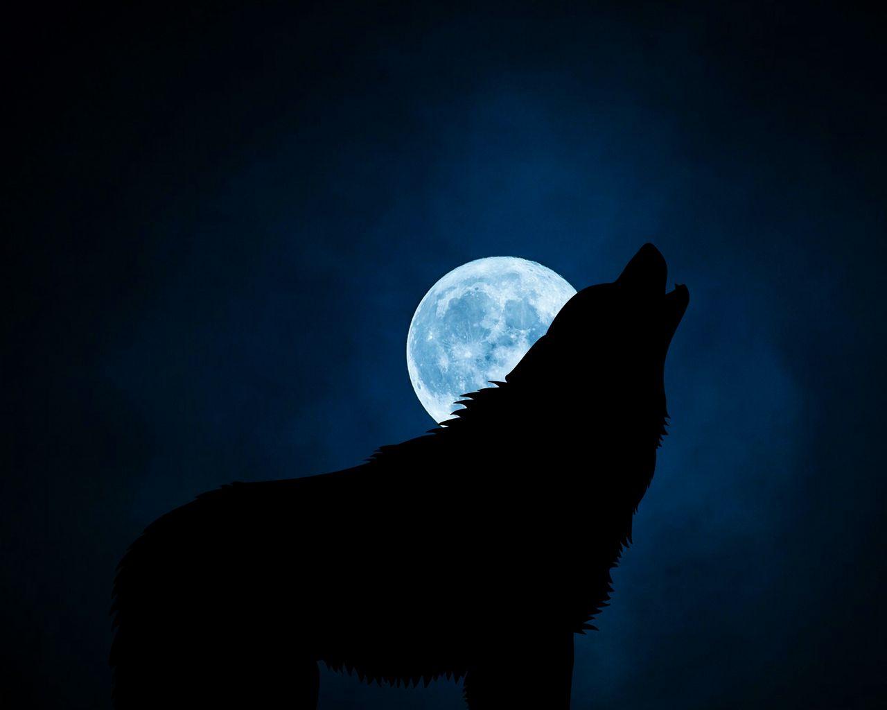 1280x1024 Wallpaper wolf, silhouette, moon, night