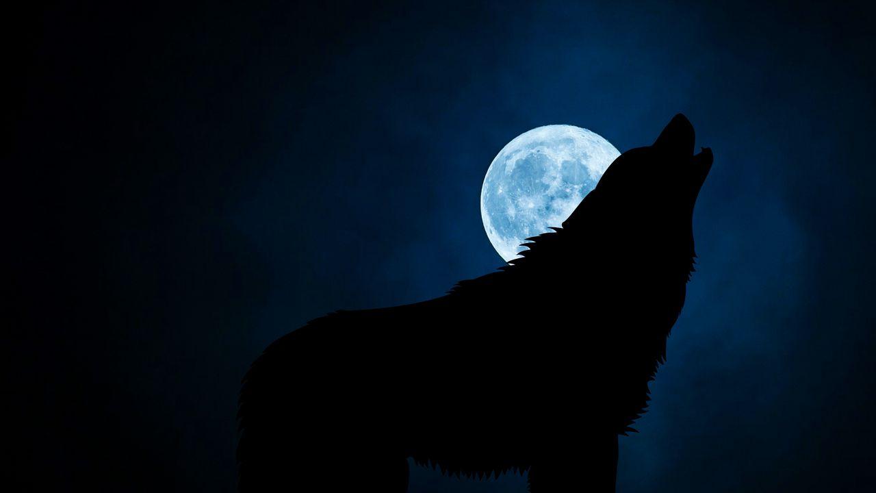 1280x720 Wallpaper wolf, silhouette, moon, night