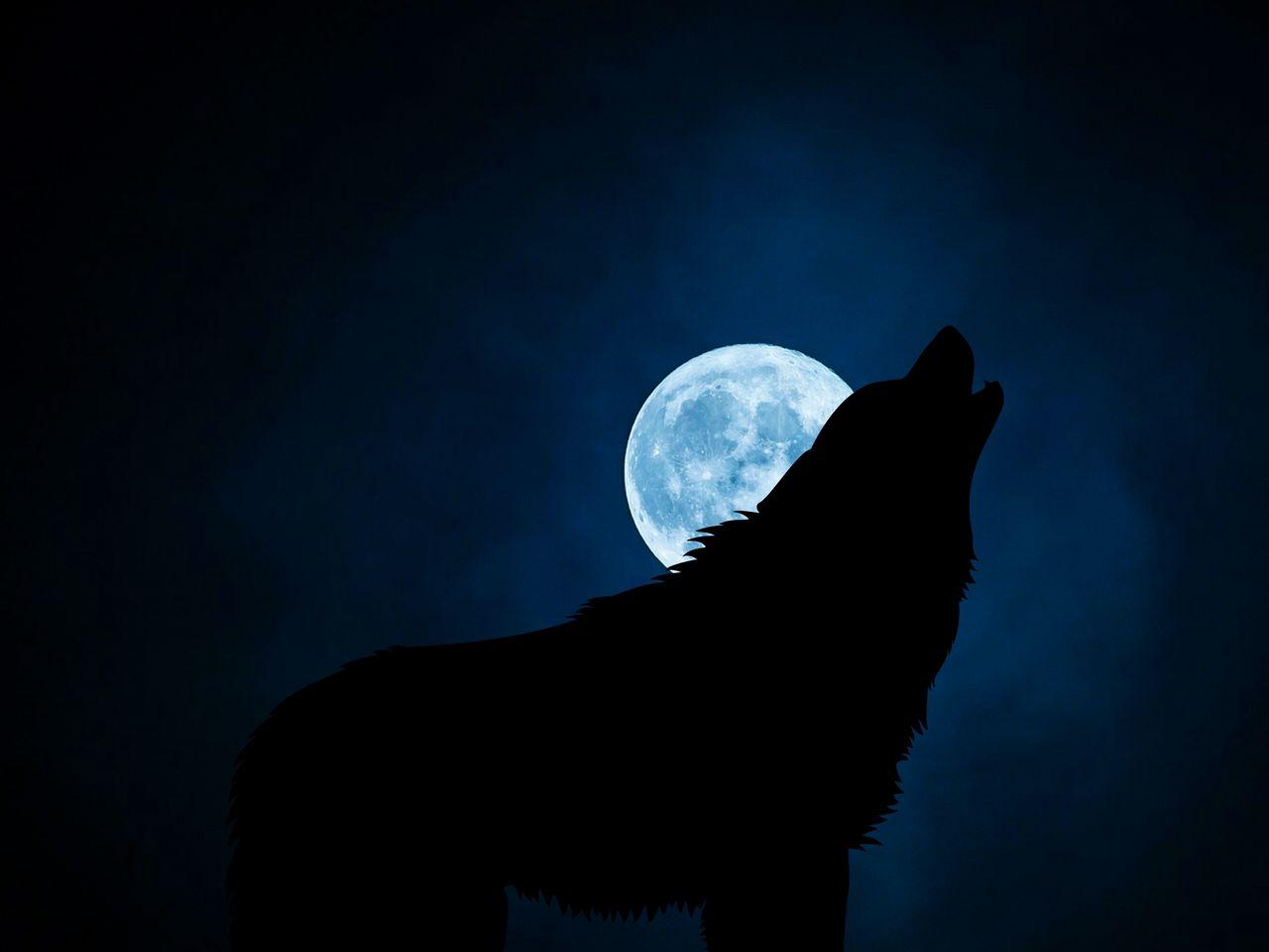1280x960 Wallpaper wolf, silhouette, moon, night