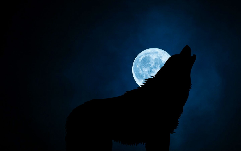 1440x900 Wallpaper wolf, silhouette, moon, night