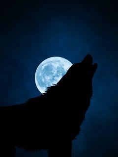 240x320 Wallpaper wolf, silhouette, moon, night