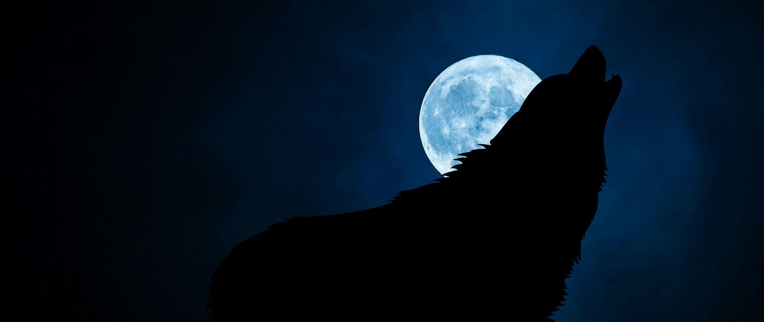 2560x1080 Wallpaper wolf, silhouette, moon, night
