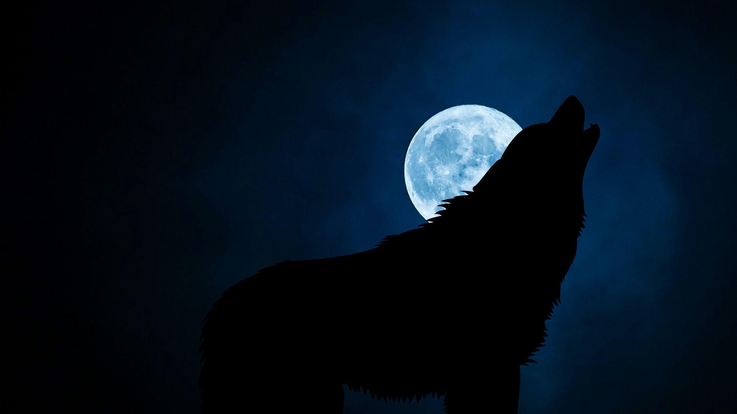 2560x1440 Wallpaper wolf, silhouette, moon, night