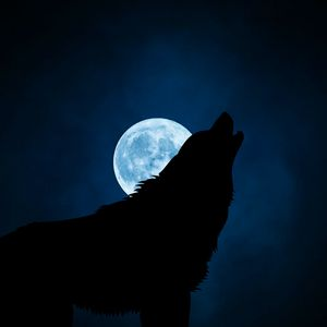 Preview wallpaper wolf, silhouette, moon, night