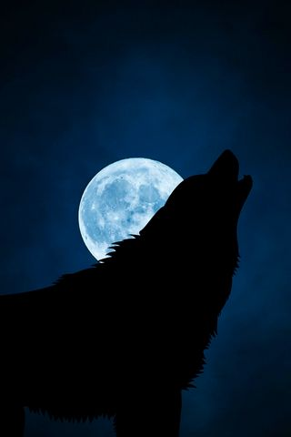 320x480 Wallpaper wolf, silhouette, moon, night