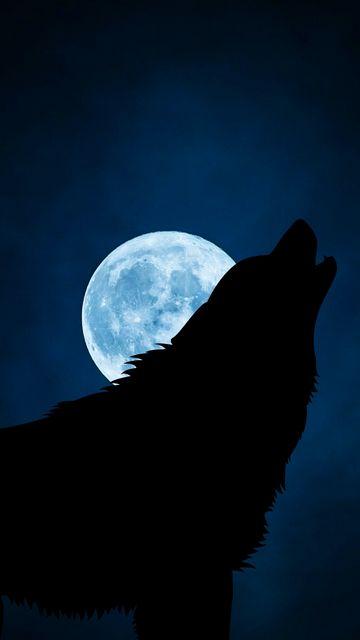 360x640 Wallpaper wolf, silhouette, moon, night