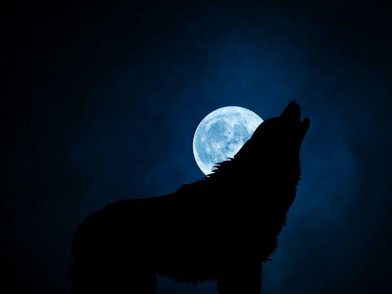 800x600 Wallpaper wolf, silhouette, moon, night