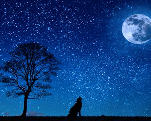 Preview wallpaper wolf, starry sky, tree, moon