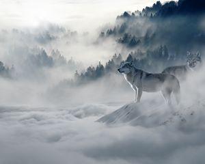 Preview wallpaper wolf, wolves, predators, fog, snow, mountains